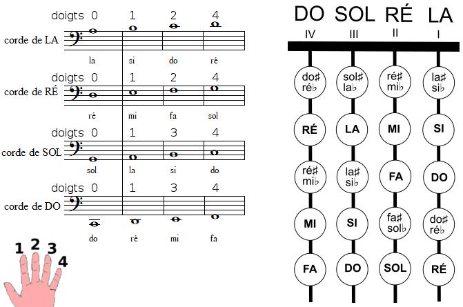 les positions des notes sur le manche d'un violoncelle